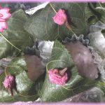 季節の和菓子「桜餅」のギモン―食文化の違いは桜餅にも。