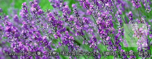 20160706-lavender-image